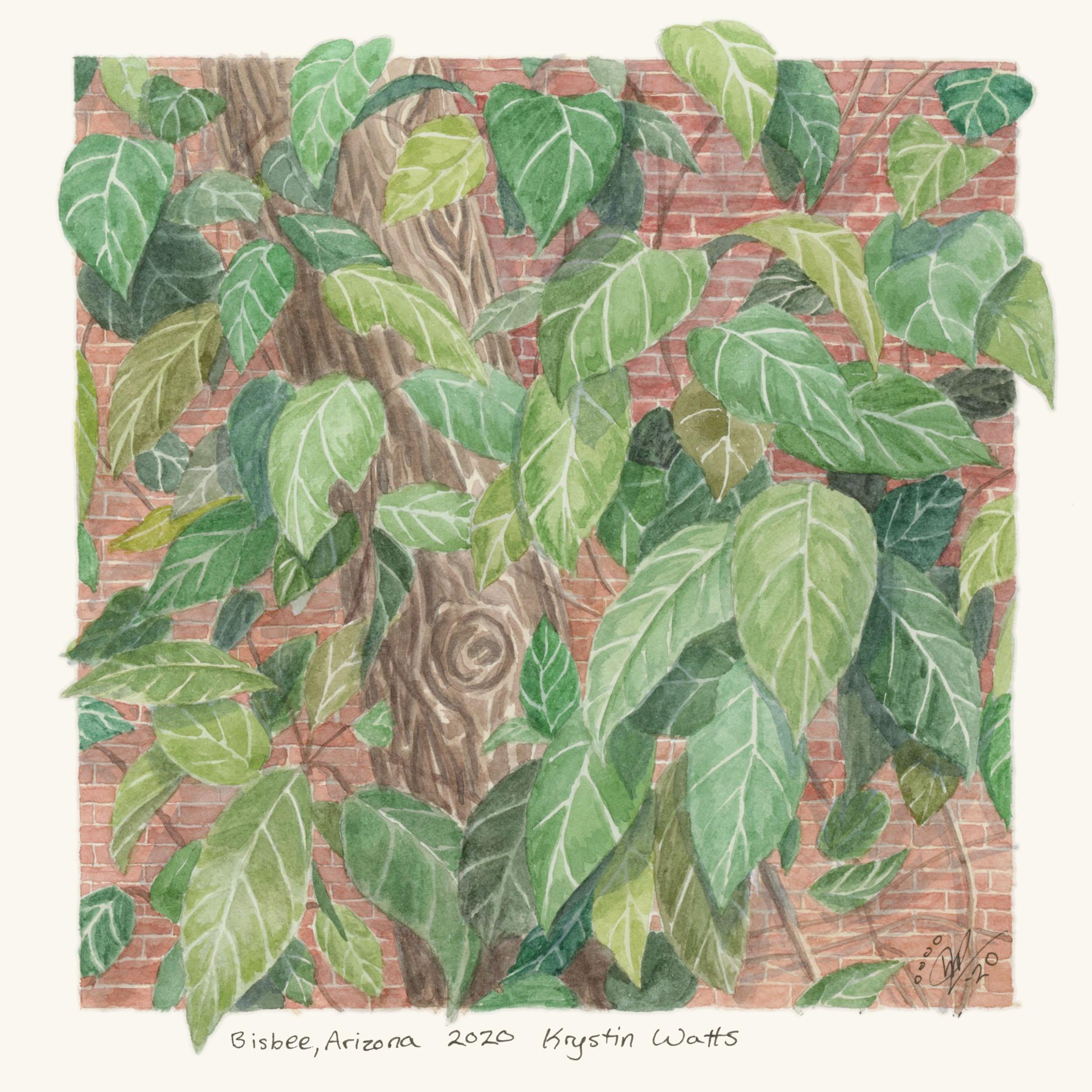 Leafy Vine from Arizona